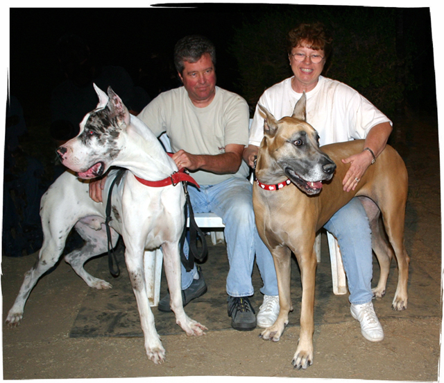 2 Great Dane adults