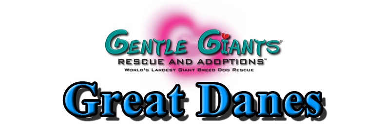 Shelties at Gentle Giants Rescue and Adoptions